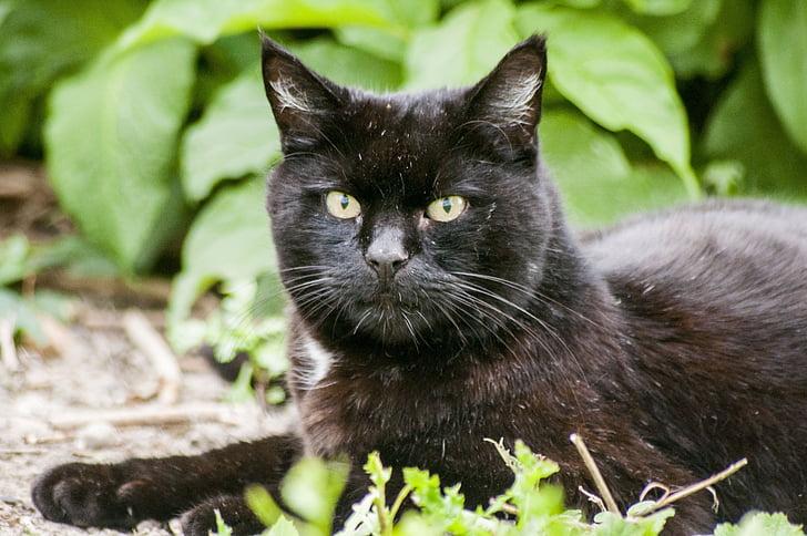crna maca 18
