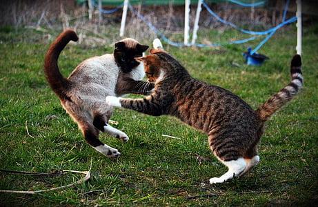 cat, kitten, fight, play, mieze, young cat, mackerel