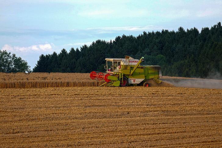 camp, recol·lectora, collita de cereals, l'agricultura, collita, gra, tuds