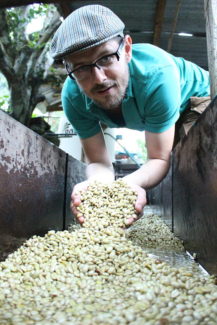 cafè de pergamí, cafè, grans de cafè, Pergamino, rentat, Perú, ablution de cafè