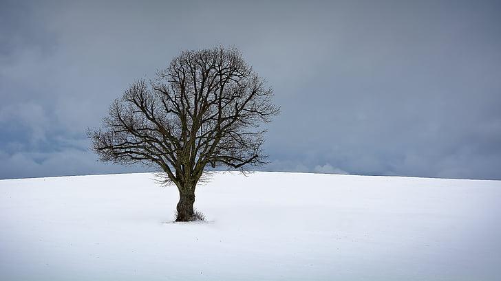 tree, winter, snow, nature, winter trees, landscape, wintry