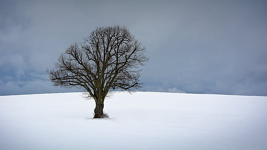 boom, winter, sneeuw, natuur, winter bomen, landschap, winterse