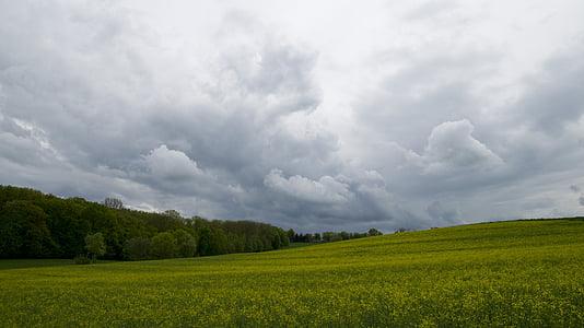 pole, Rolnictwo, rzepak, pól, lasu, Natura, Chmura