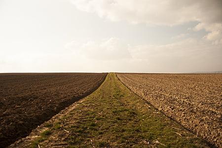полета, орни, околна среда, природата, пейзаж