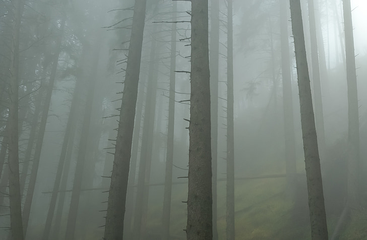 forest, mist, morning, fog, fantasy, autumn, leaves