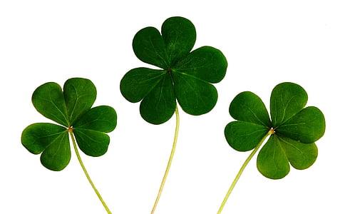 tres, hoja, hojas, verde, icono, naturaleza, tréboles