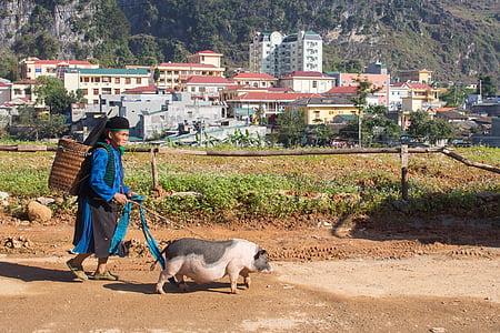 dona, vell, porc, pobre, Vietnam, Dong van, basar