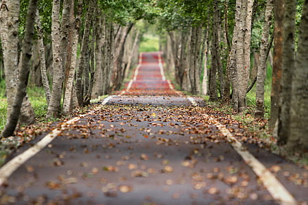woodland, road, falling leaf, natural, tree wood, tree, diminishing perspective