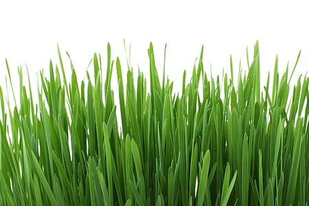 fons, close-up, flora, fresc, jardí, herba, verd