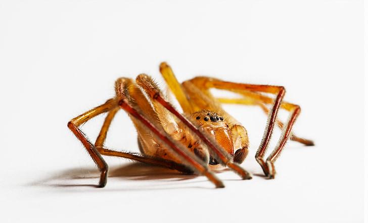 людина-павук, макрос, сильні