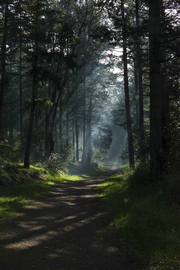 natureza, floresta, floresta, estrada, Trek, árvores, verde