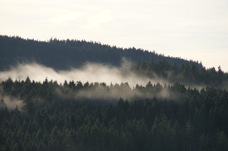 schluchsee, black forest, fog, forest