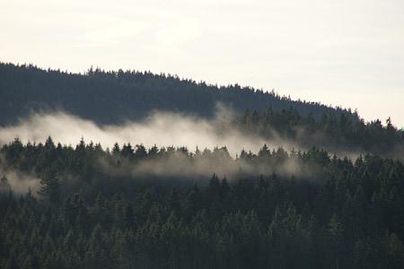 Schluchsee, Selva Negra, boira, bosc