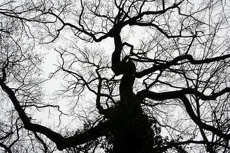 arbre, llum, cel, contra la llum, natura, contrasten, branca