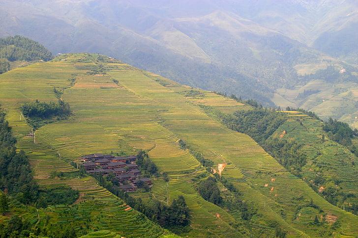 rice, plantation, rice plantations, rice fields, asia, landscape, field
