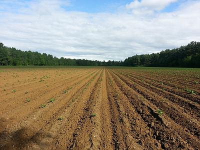toidu, seemne, mulla, põllumajandus, seemikud, külvi