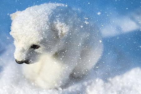 polar bear, predator, animal, white, young, sitting, snow
