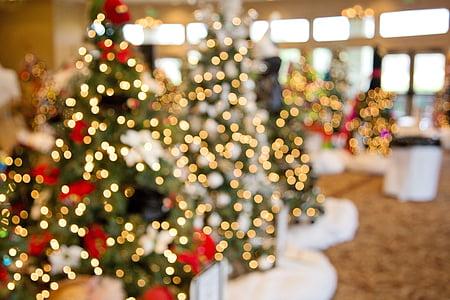 alberi di Natale, bokeh, decorazione, Xmas, Natale, luminoso, Merry