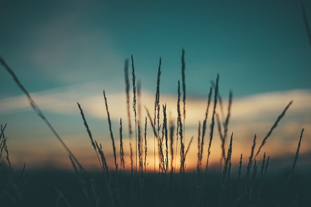Dawn, amurg, câmp, iarba, silueta, Răsărit de soare, apus de soare