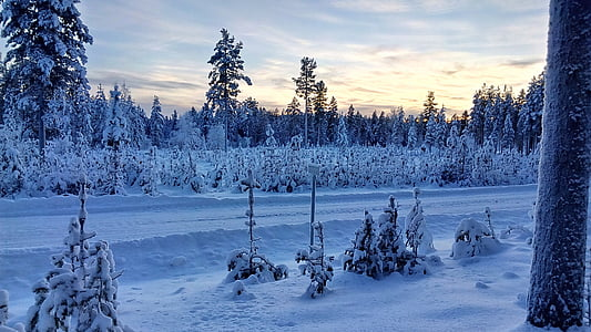 lapland, sweden, wintry, snow, winter, nature, forest
