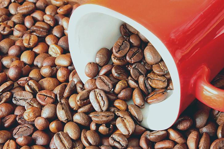grans de cafè, cafè, grans, beguda, Copa, gra de cafè