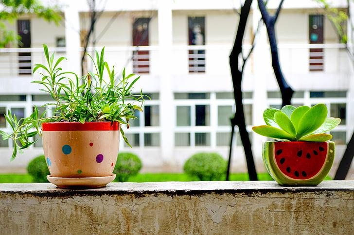 Bonsai, nyári, Csendélet, virágok otthon, Cserepes növény
