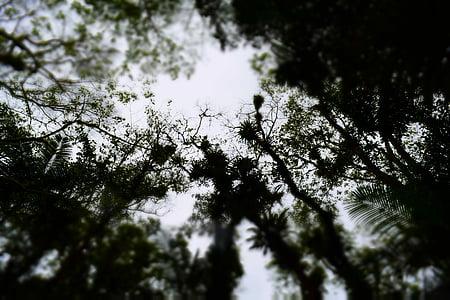 bosc, ombra, bosc Atlàntic brasiler, Cova del diable, natura