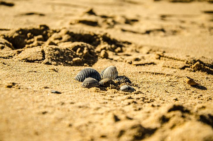pludmale, daba, gliemežvāku, smilts, tīrība