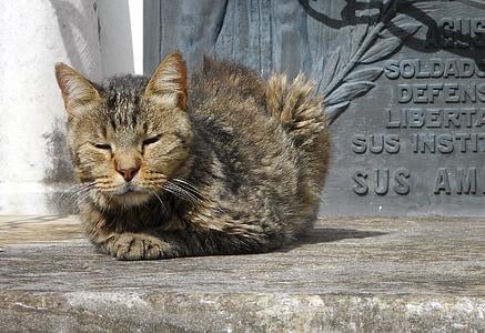 gat, Cementiri, Pau, dormint, assolellat, felí, salvatge