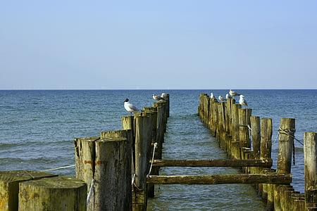 Balti-tenger, Beach, Zingst, víz, sirály, tengerpart, tenger
