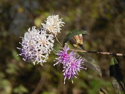 flower, lilac, wild, purple, flowers lilac, wild flower