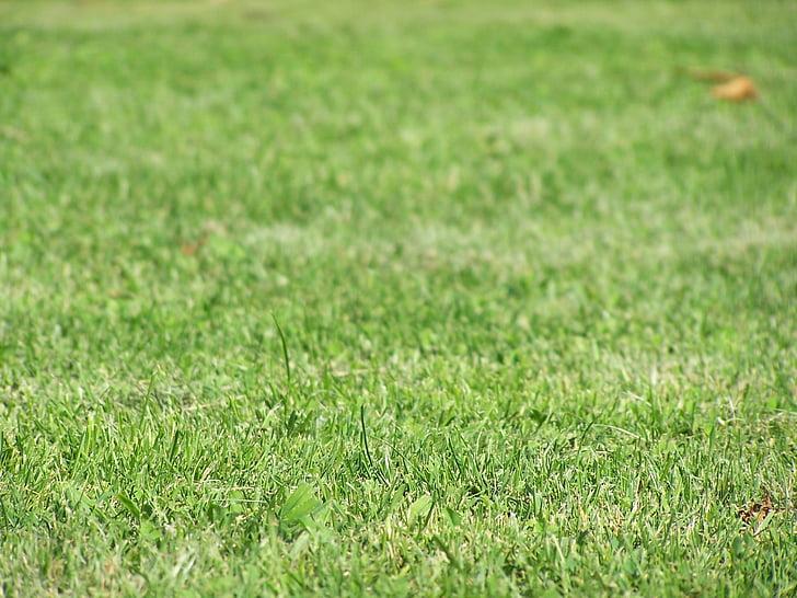 tráva, životné prostredie, pôdy, Zelená