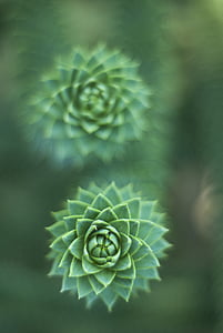 detail, Zelená, makro, rastlín, Príroda, Zelená farba, Leaf