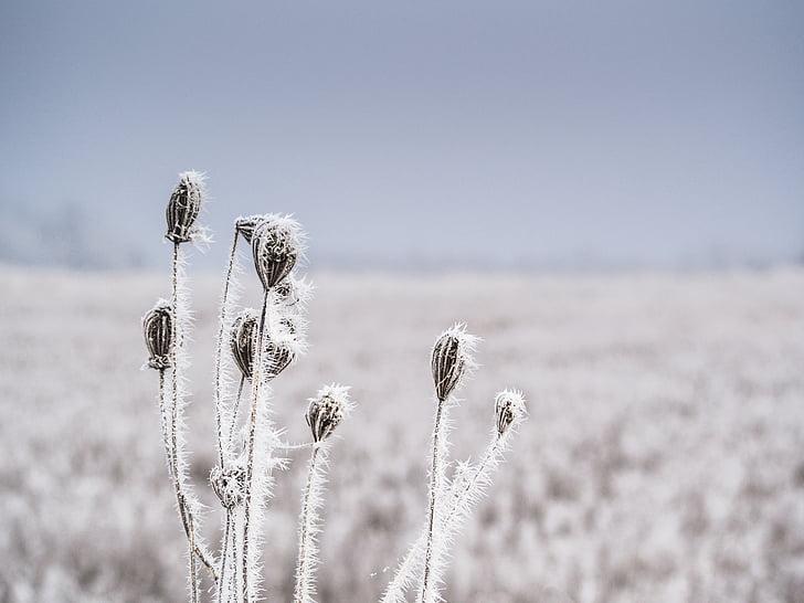 cold, frost, frozen, nature, rime, snow, snowflakes