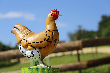 пиле, месо, Пуле, птици, храна, Селско стопанство, ферма