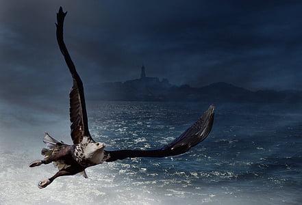 Adler, orol bielohlavý, more, vták, zviera, biele sledoval eagle, dravých vtákov