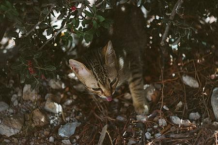 animal, beautiful, cat, cute, feline, kitten, little