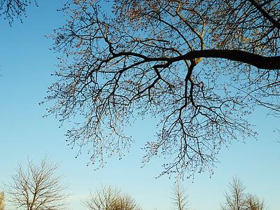 arbre, branca, branques, llum i ombra, natura, paisatge, ombres