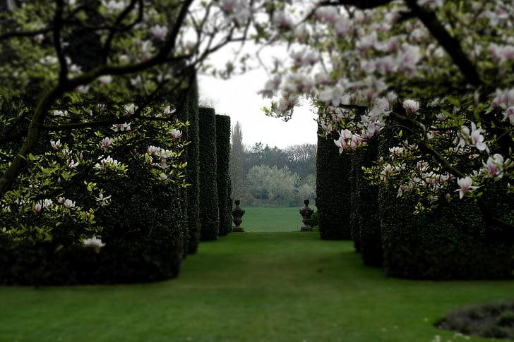 dārza, klasiskais dārzs, magnolijas, sienu ceļš