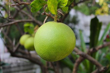 aranja, fruita, cítrics, Sa, fresc, tropical, natural