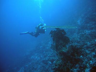 Submarinisme, sota l'aigua, l'aigua, món submarí, Mar, bussejadors, Coral