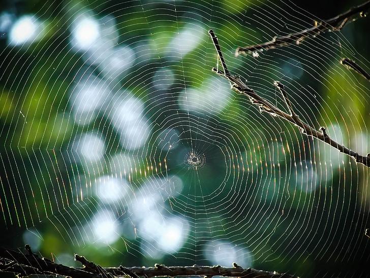 ใยแมงมุม, เว็บ, แมงมุม, ต้นไม้, กับดัก, ธรรมชาติ, ค็อบเว็บอินเตอร์