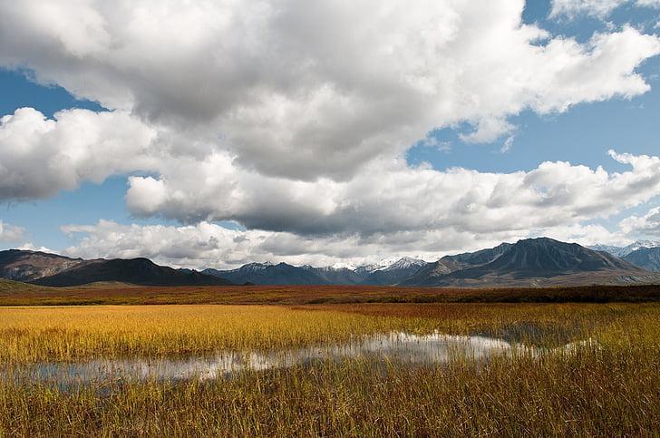 dočasných rybník, krajina, malebný, Příroda, Divočina, voda, venku