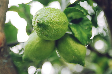 agrumes, agrumes, gros plan, fruits, vert, feuilles, citron