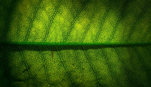 leaf, nature, green, the leaves, hwalyeob, abstract, plants