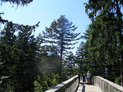 Krošnja pot, Bavarski gozd, Web, Riva, drevo sled, gozd, dreves
