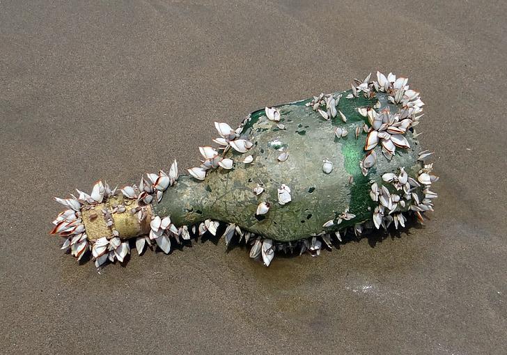 boca, školjke, morskih organizama, prati obalu, querim plaža, Arapsko more, Split