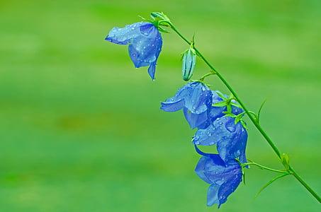 virágok, virág, növények, természet, makró, háttér, szezon
