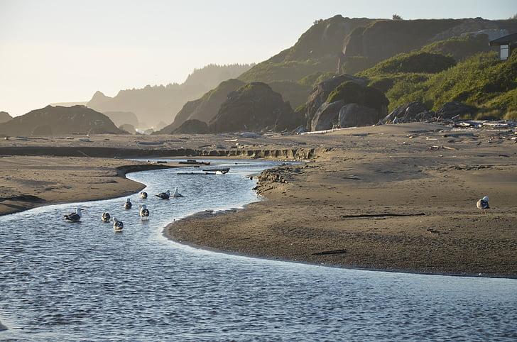 tide, mõõna, mõõn, mõõn tõusulaine, oja, Ocean, vee