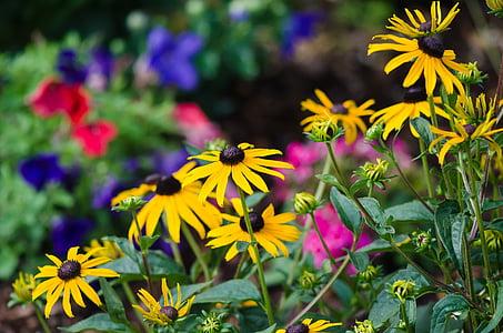 lilled, Aed, suvel, Värviline, suve lilled, värvikas lilled, loodus